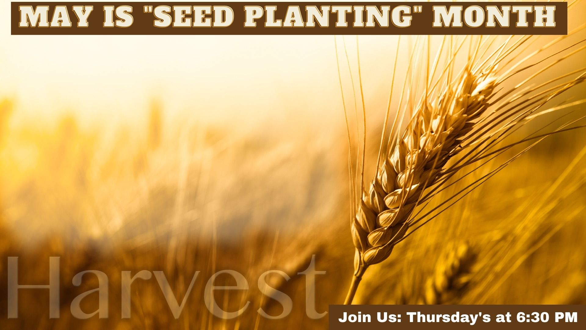 May is Seed planting Month at Saint Phillips
